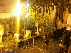 Domowa plantacja ze 112 krzewami konopi
