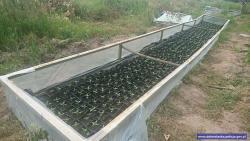 Zlikwidowana plantacja konopi owartości około 1,2 miliona złotych