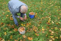 Wysyp grzybów wnaszym parku