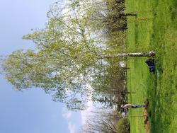 Upiększamy miasto - sadzimy drzewa ikrzewy