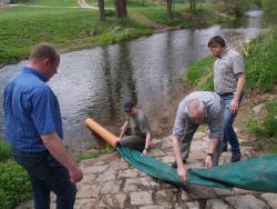 Akcja ratowania pstrągów potokowych: 800 tys. ryb trafi dodolnośląskich rzek
