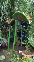 W Legnicy rusza II Festiwal roślin owadożernych