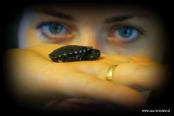 Nowi mieszkańcy wrocławskiego zoo - wykluły się jedne znajrzadszych żółwi na świecie