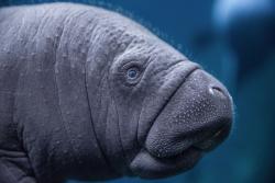 Sensacja wewrocławskim zoo  - na świat przyszedł manat