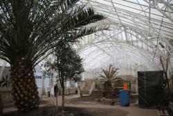 Rewitalizacja legnickiej palmiarni. Zakończono zabezpieczanie konstrukcji